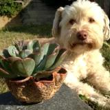 Scruffy Loves Pottery Too